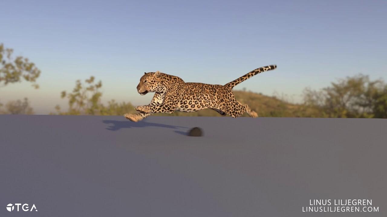Animation | Leopard Run