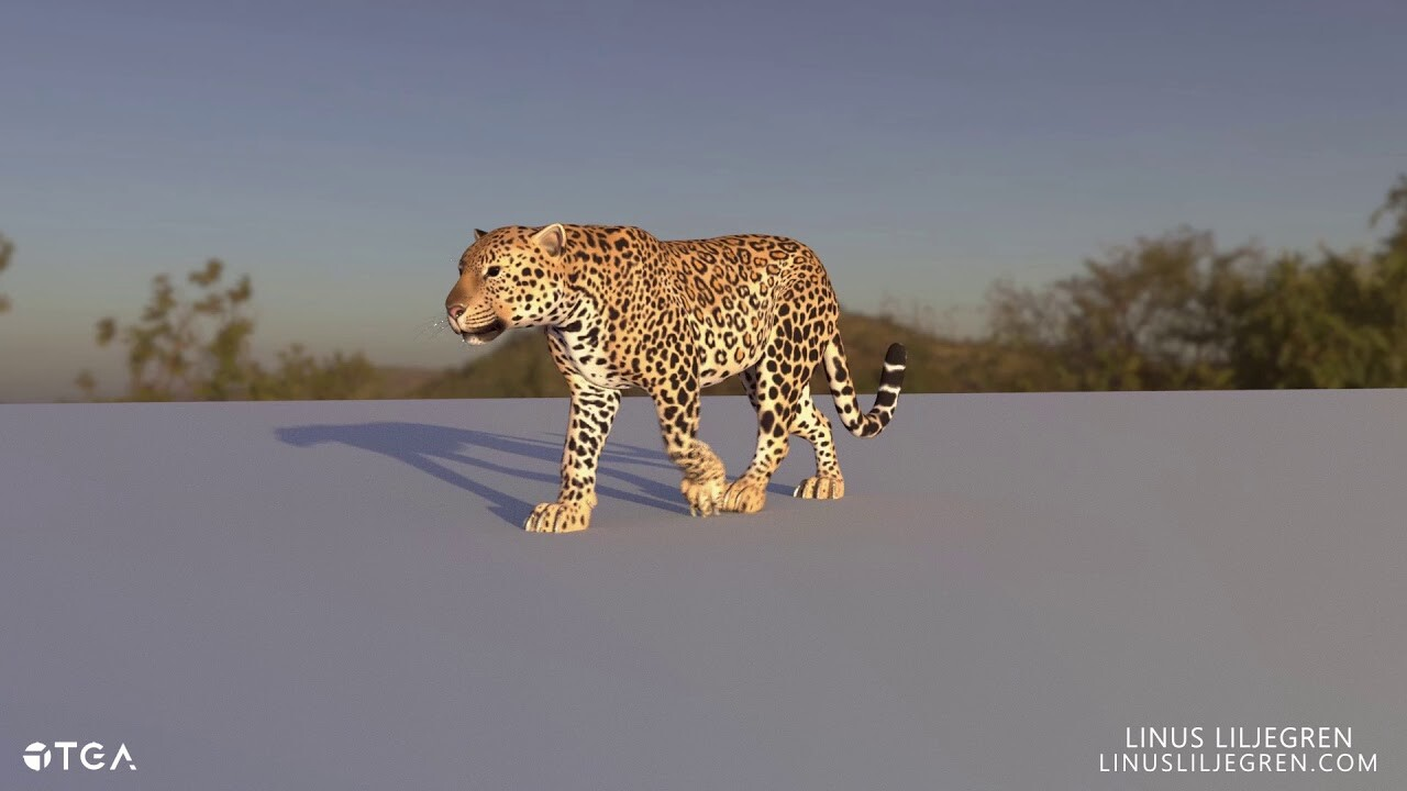 Animation | Leopard Walking