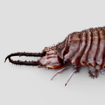 Top 10 insects on Sketchfab