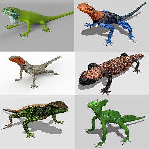 Lizards bundle