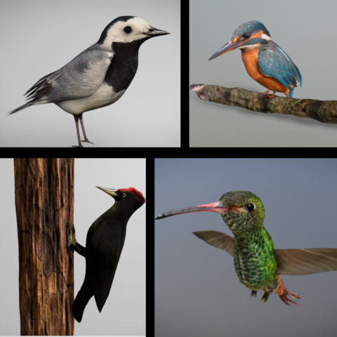 3D Birds Bundle