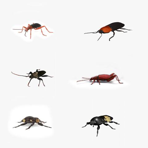 Beetles bundle