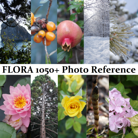 FLORA BUNDLE 1050+ Photo Reference Pictures Standard License
