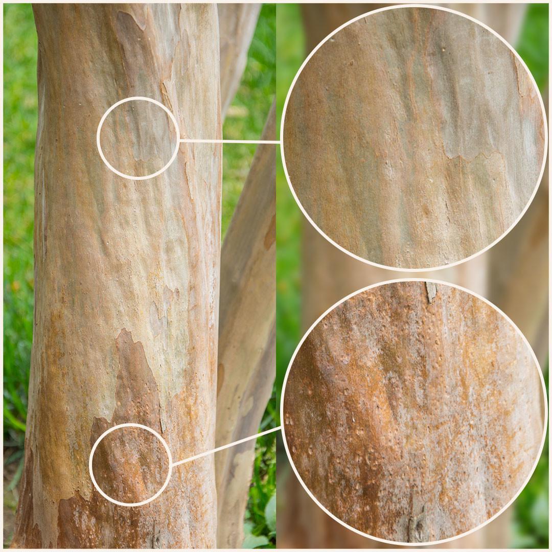 Promo tree barks vol2 4