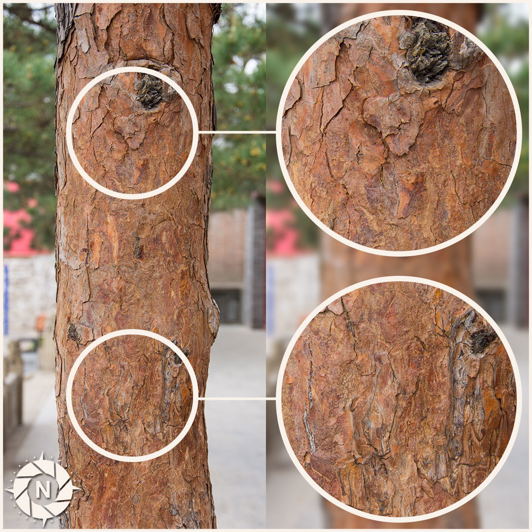 Texture reference tree barks volume1 1
