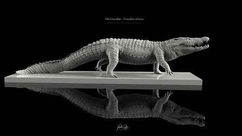Nile Crocodile 3D Model - T-Pose, LowPoly, SubD, and HighPoly Decimated