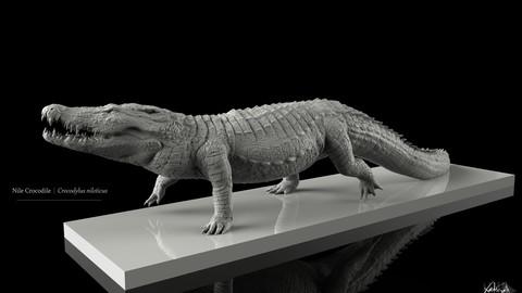 Nile Crocodile Walking Pose 3D Model Decimated