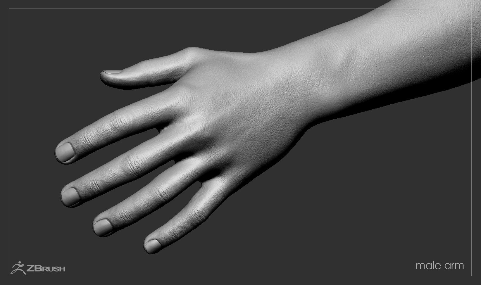 Firstpersonarms zbrush 13