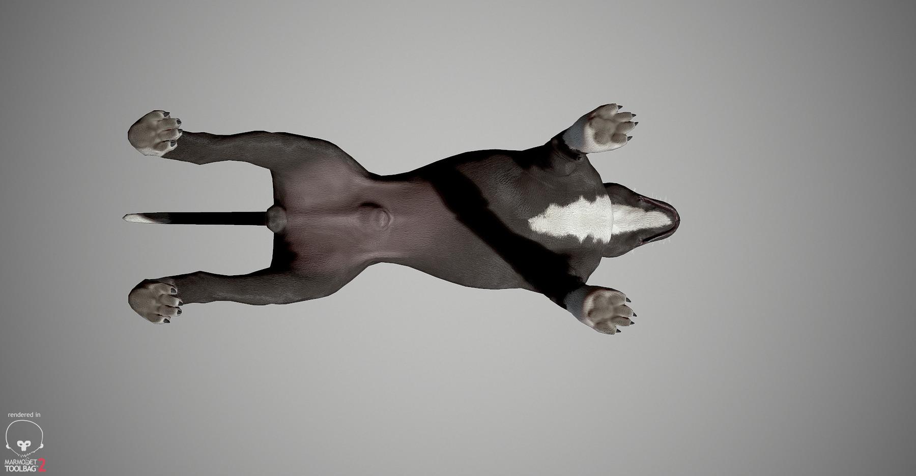 Pitbull by alexlashk marmoset 12