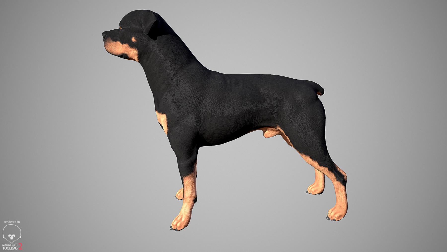 Rottweiler by alexlashko marmoset 03
