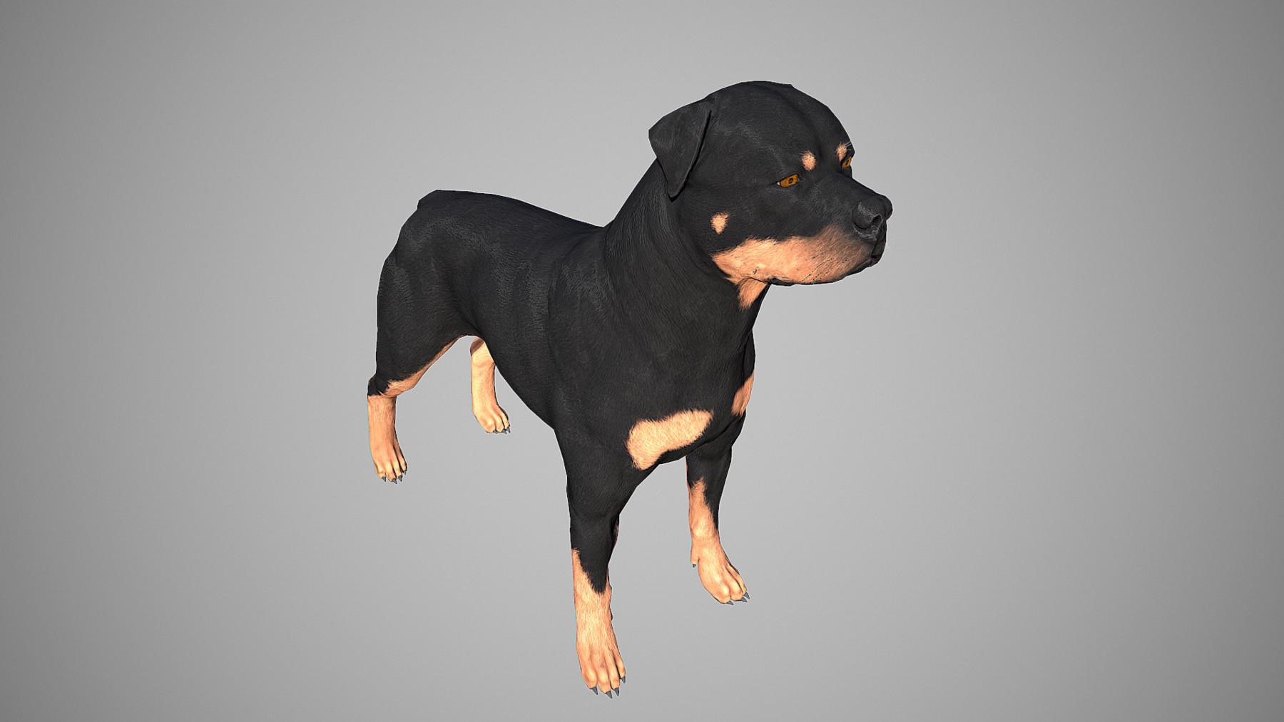 Rottweiler by alexlashko marmoset 07