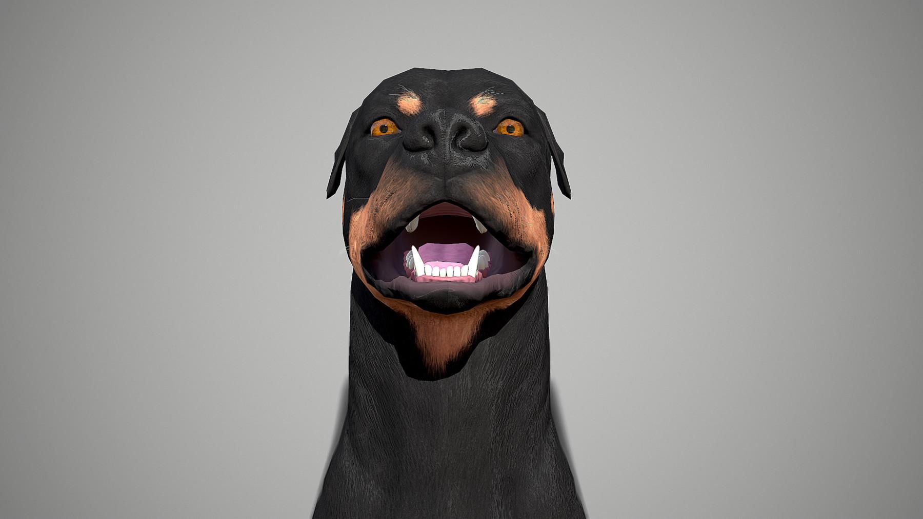 Rottweiler by alexlashko marmoset 15