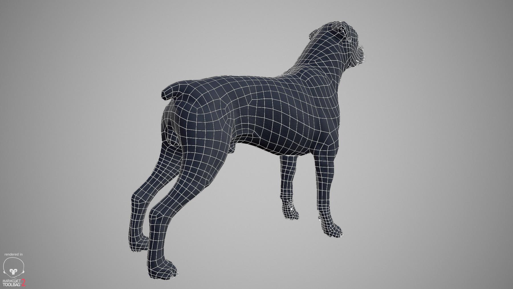 Rottweiler by alexlashko wireframe 02