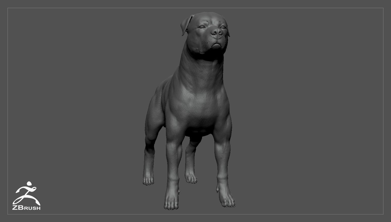 Rottweiler zbrush 02