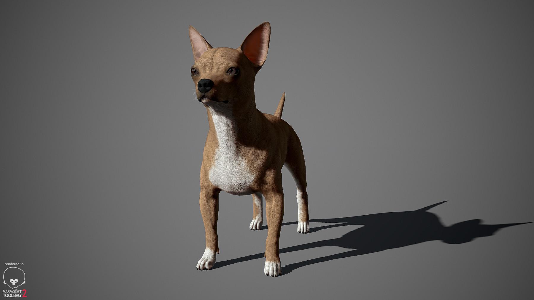 Chihuahua by alexlashko marmoset 06