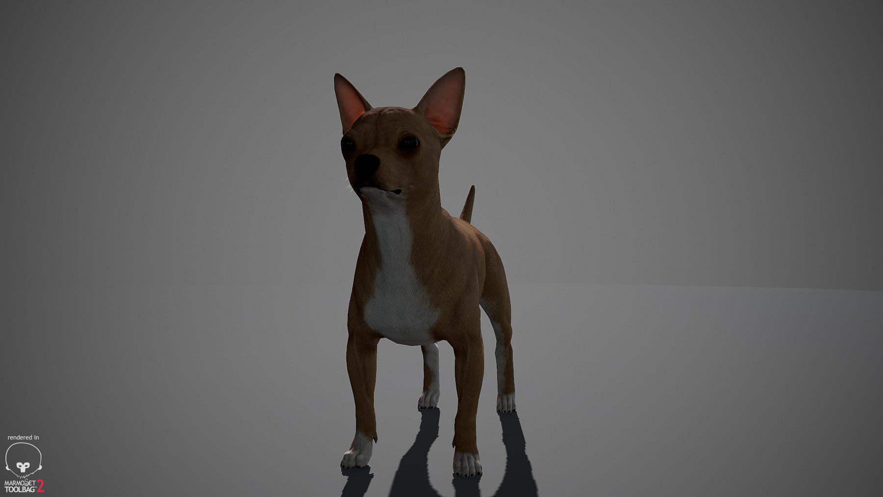 Chihuahua by alexlashko marmoset 08