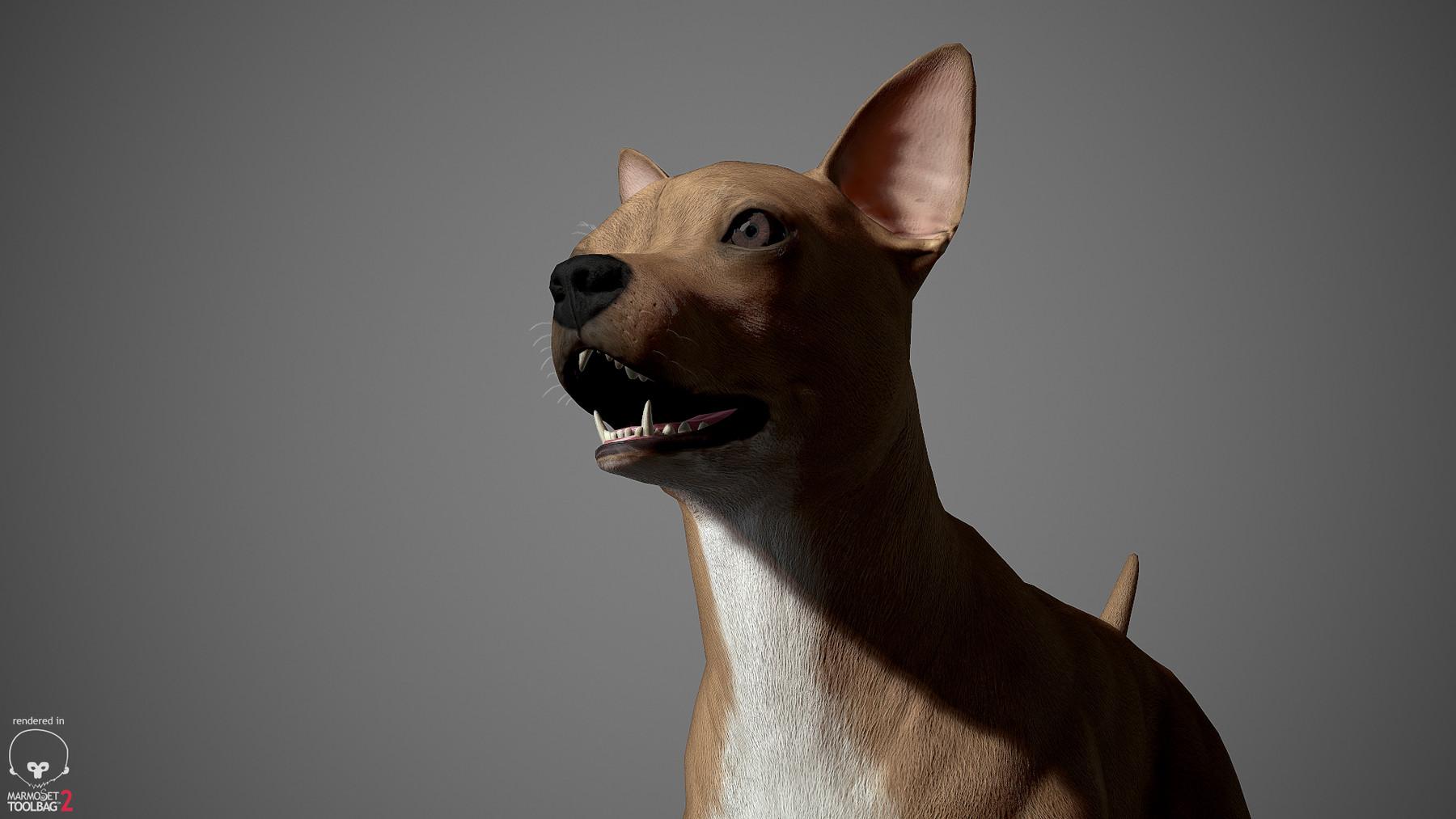 Chihuahua by alexlashko marmoset 18