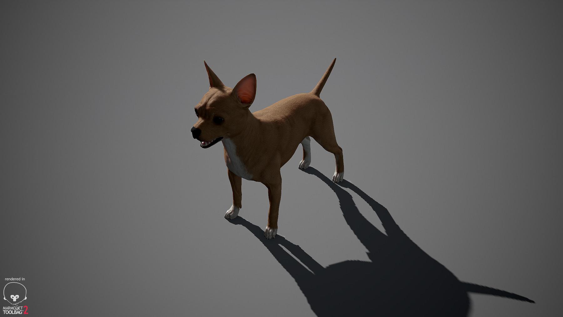 Chihuahua by alexlashko marmoset 20