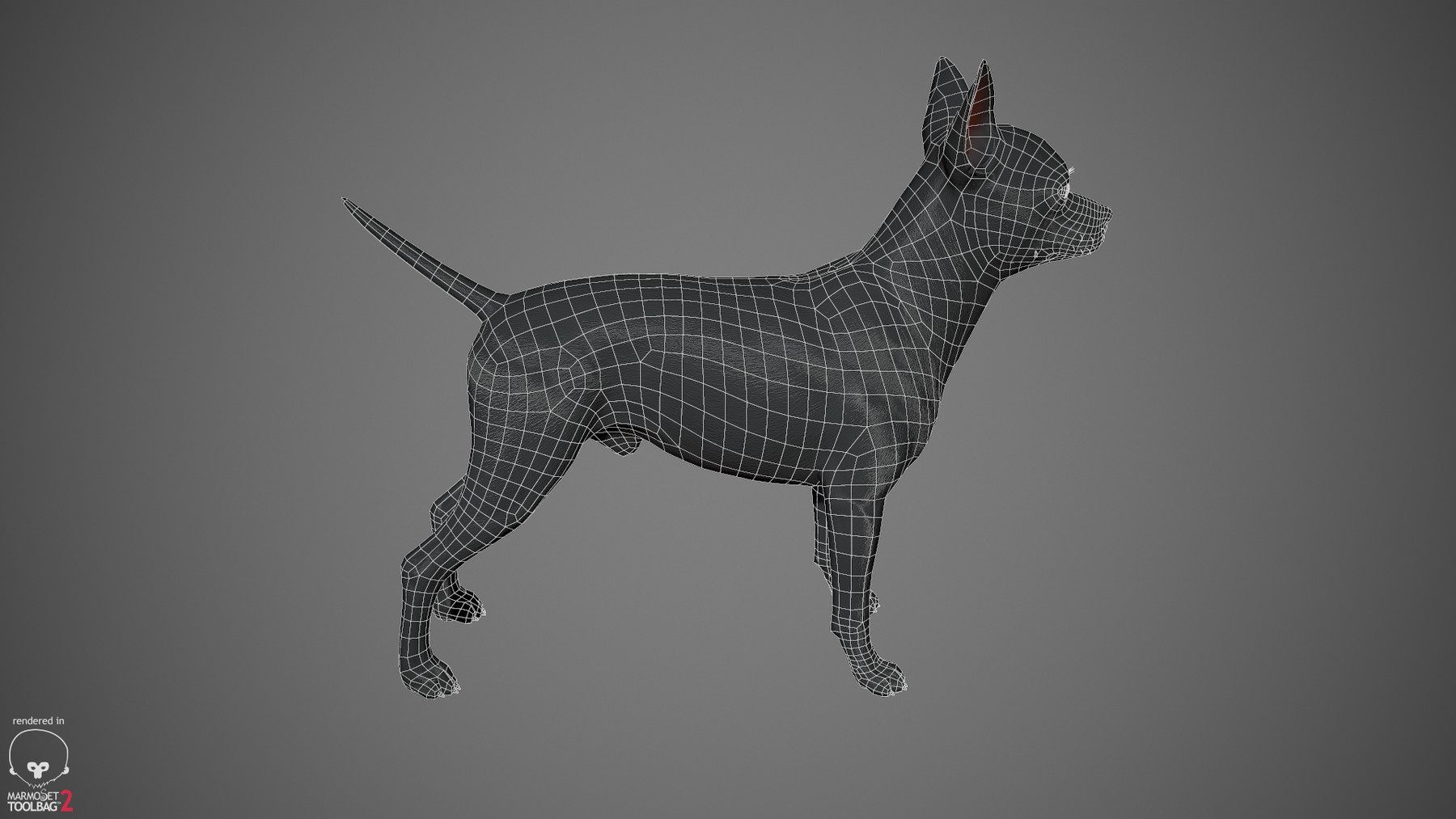 Chihuahua by alexlashko wireframe 03
