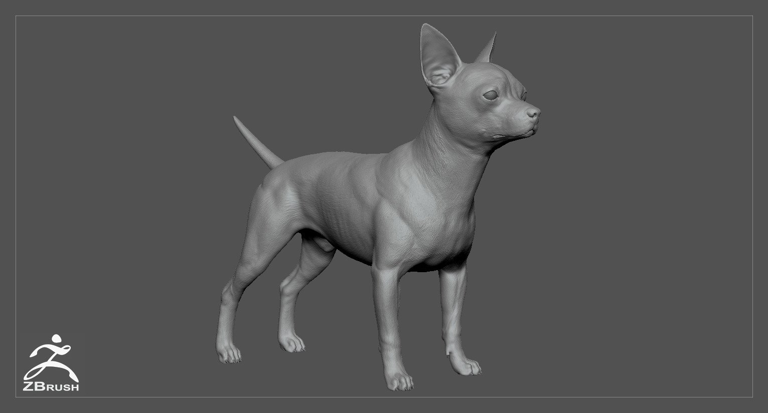 Chihuahua by alexlashko zbrush 01