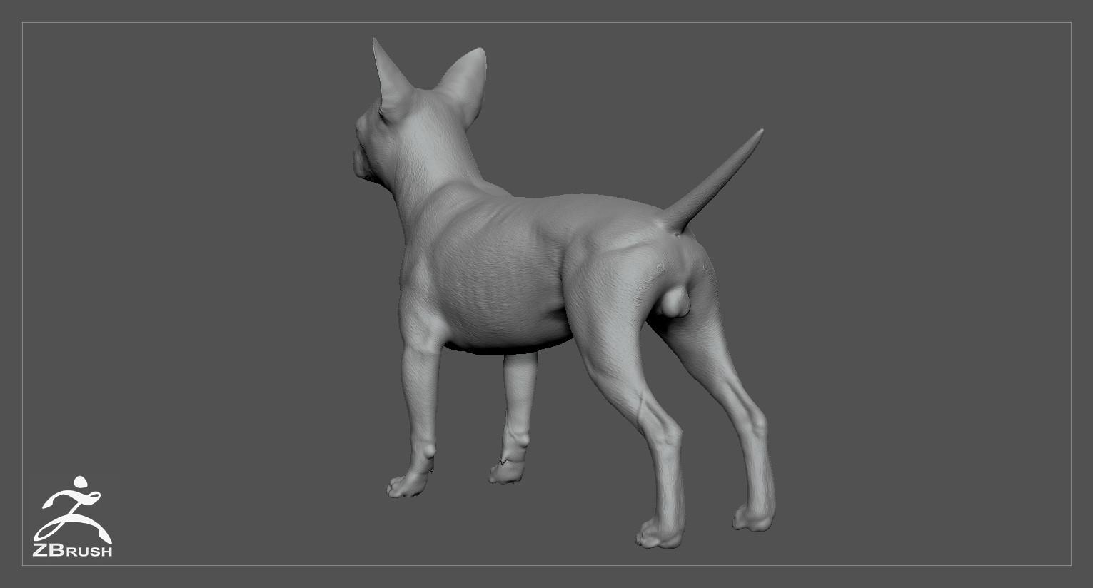 Chihuahua by alexlashko zbrush 05