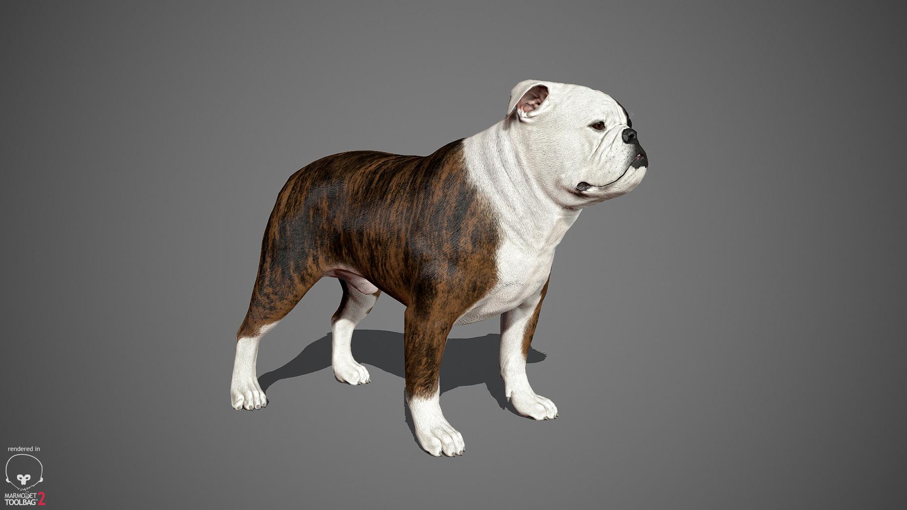 Englishbulldog by alexlashko marmoset 03