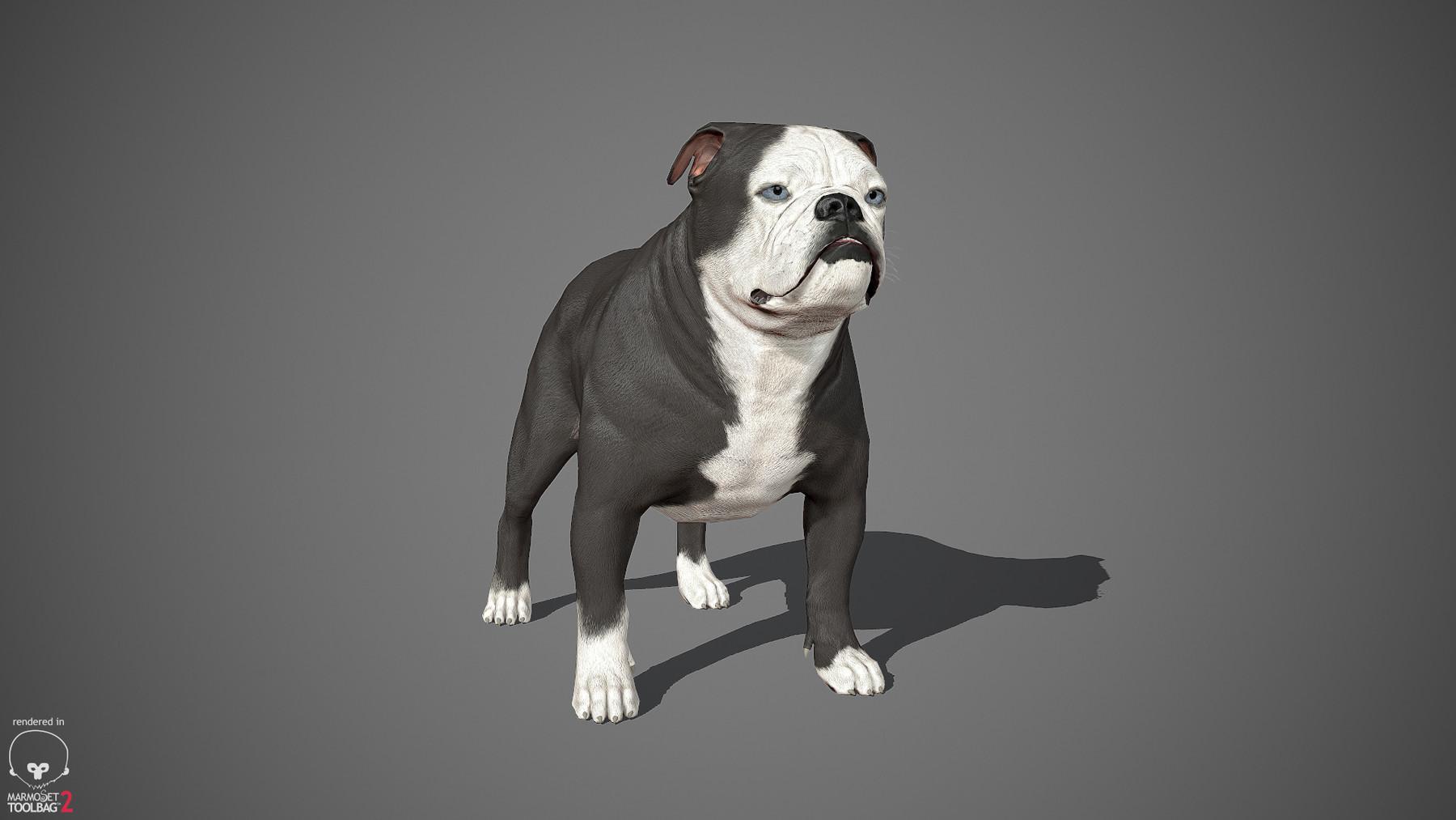 Englishbulldog by alexlashko marmoset 05
