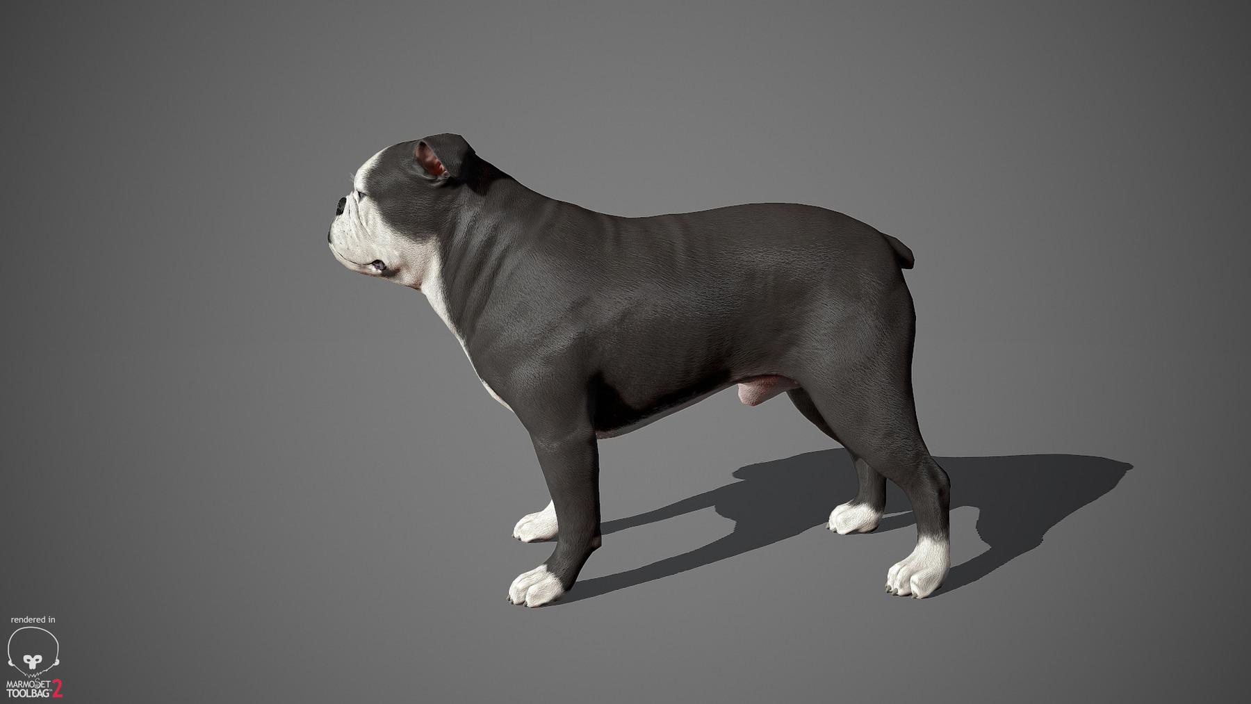 Englishbulldog by alexlashko marmoset 11