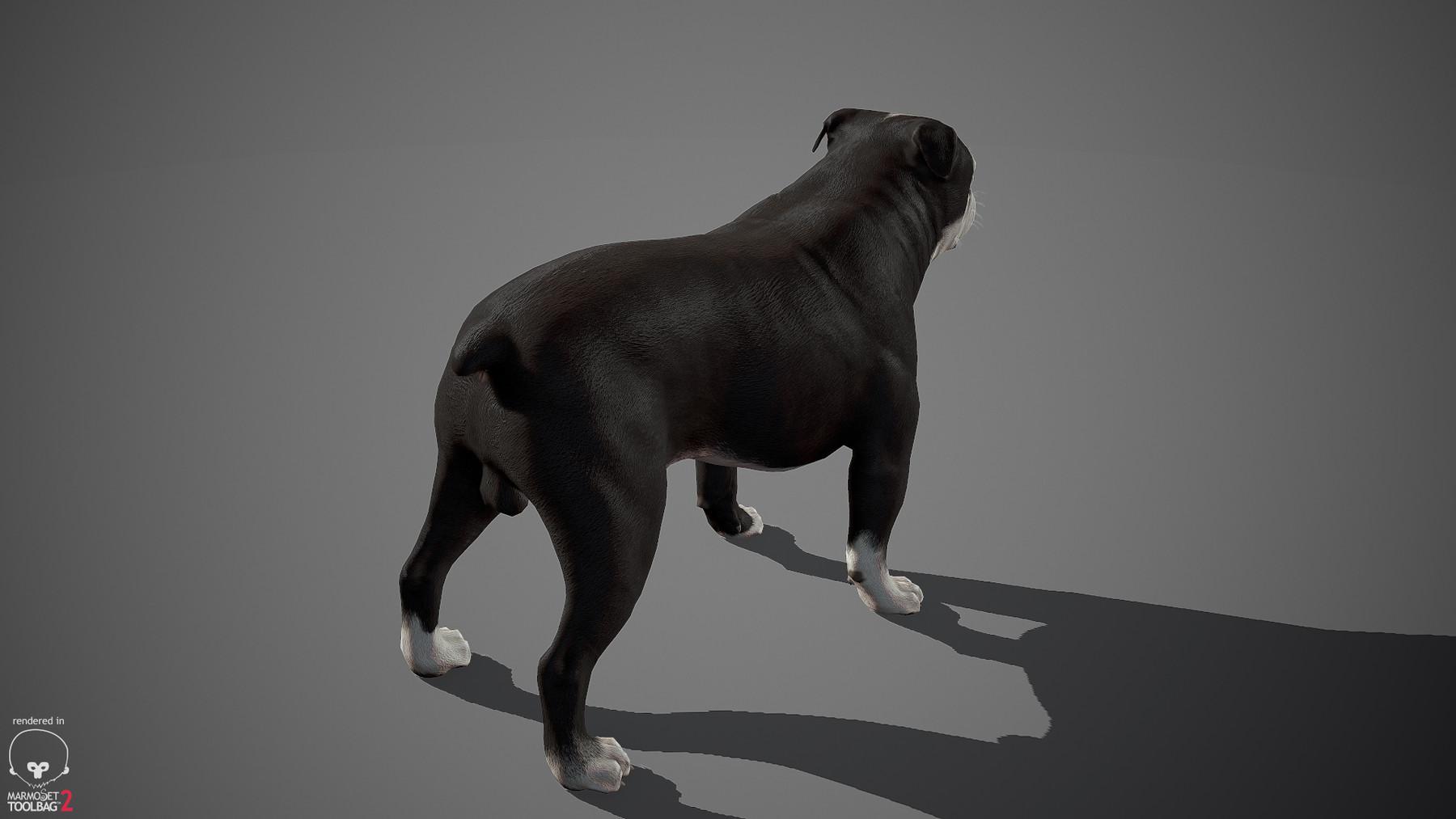 Englishbulldog by alexlashko marmoset 13