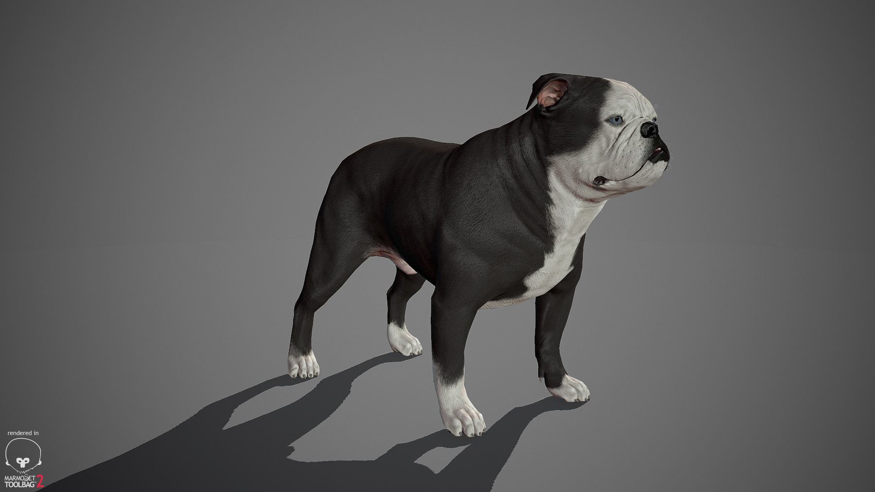 Englishbulldog by alexlashko marmoset 15