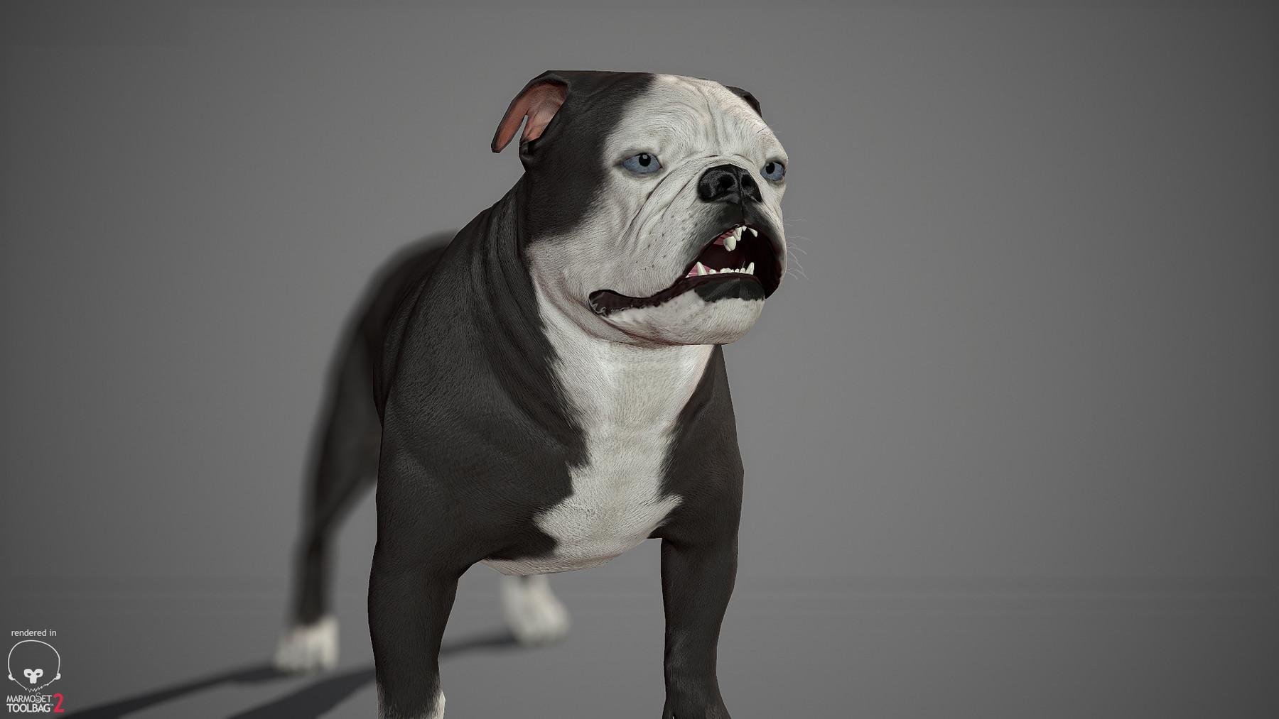 Englishbulldog by alexlashko marmoset 19