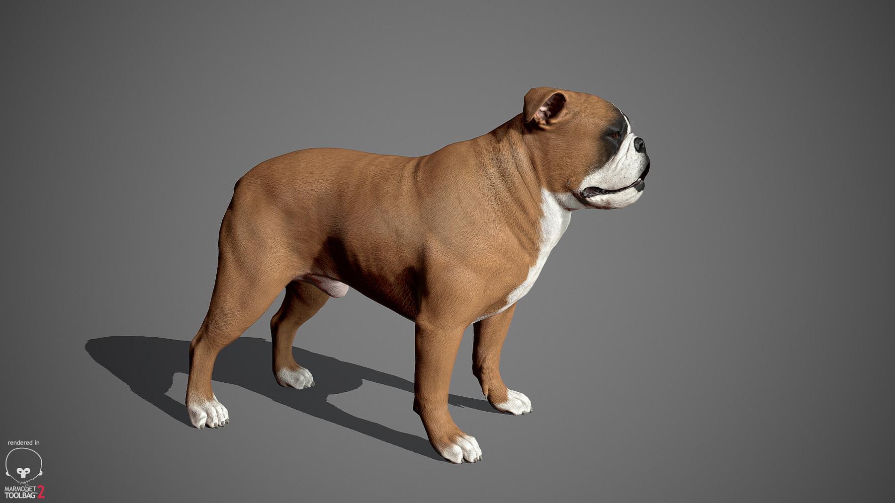 Englishbulldog by alexlashko marmoset 23