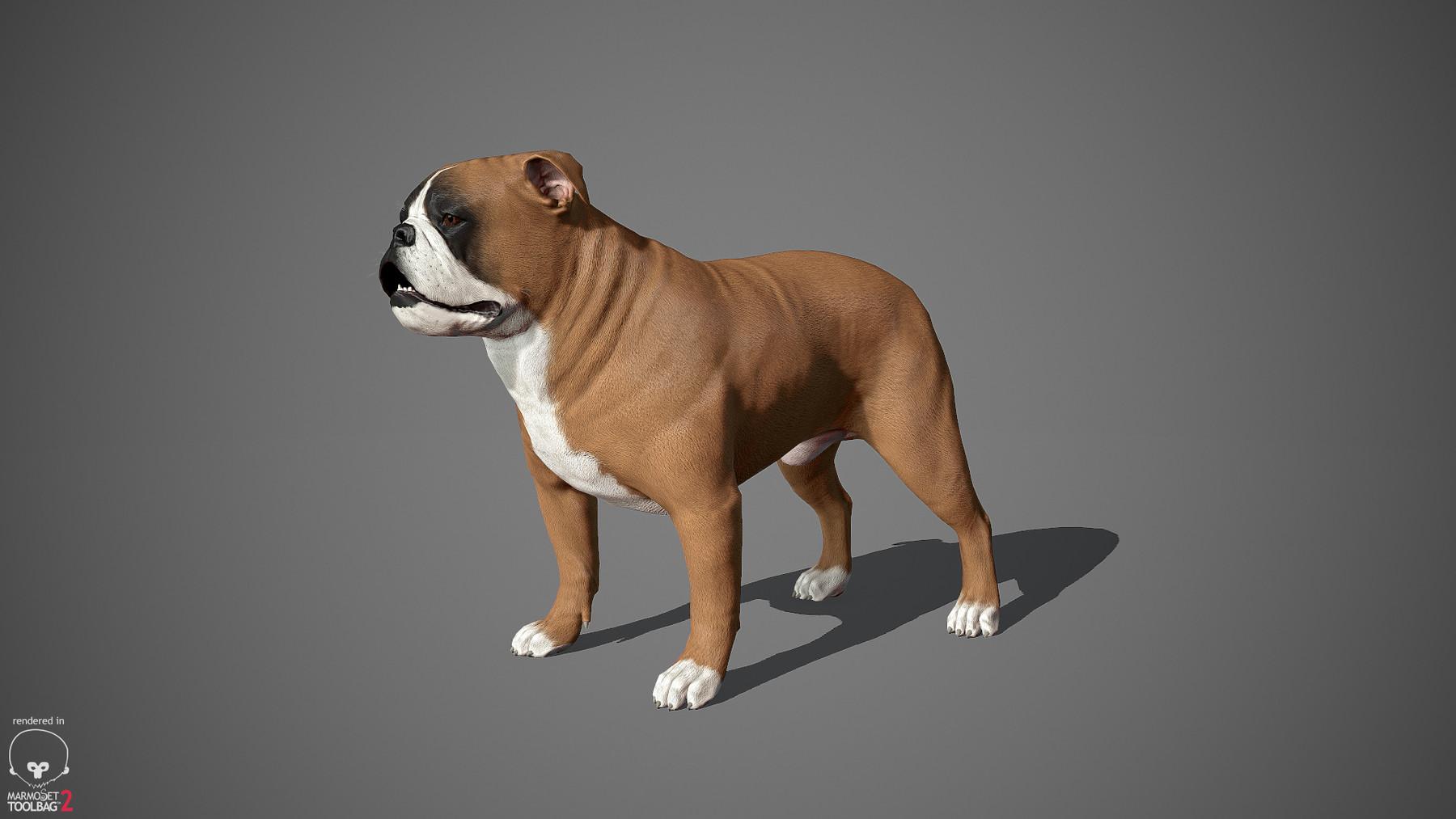 Englishbulldog by alexlashko marmoset 25