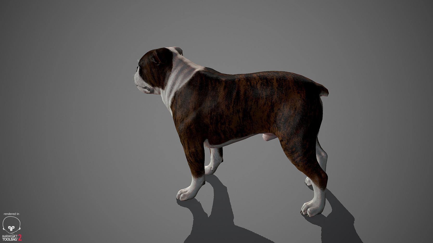 Englishbulldog by alexlashko marmoset 28