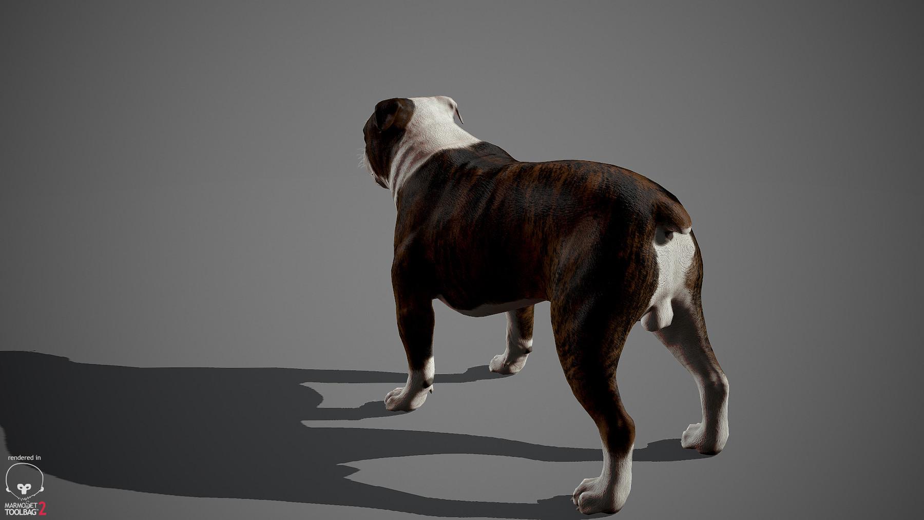 Englishbulldog by alexlashko marmoset 29