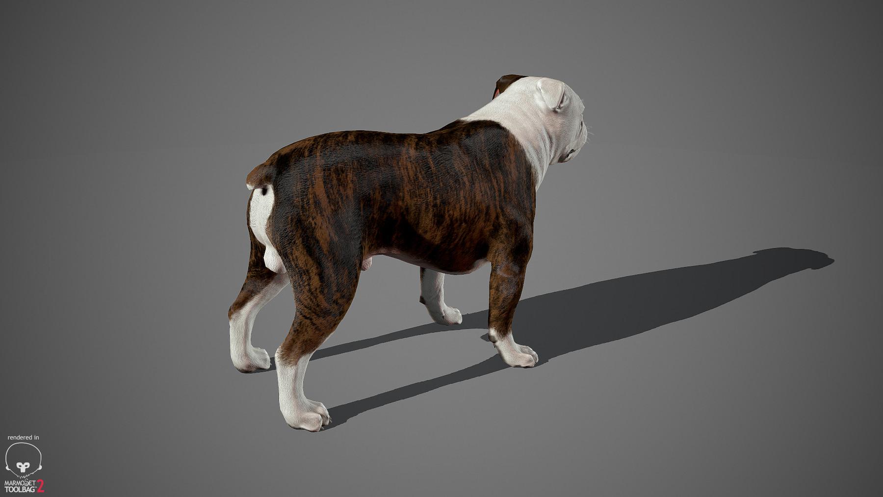 Englishbulldog by alexlashko marmoset 30