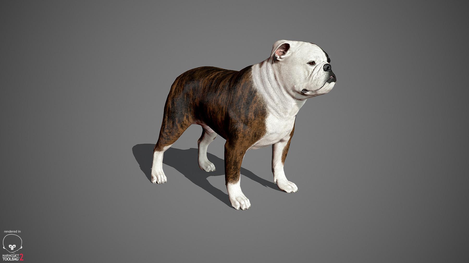 Englishbulldog by alexlashko marmoset 32