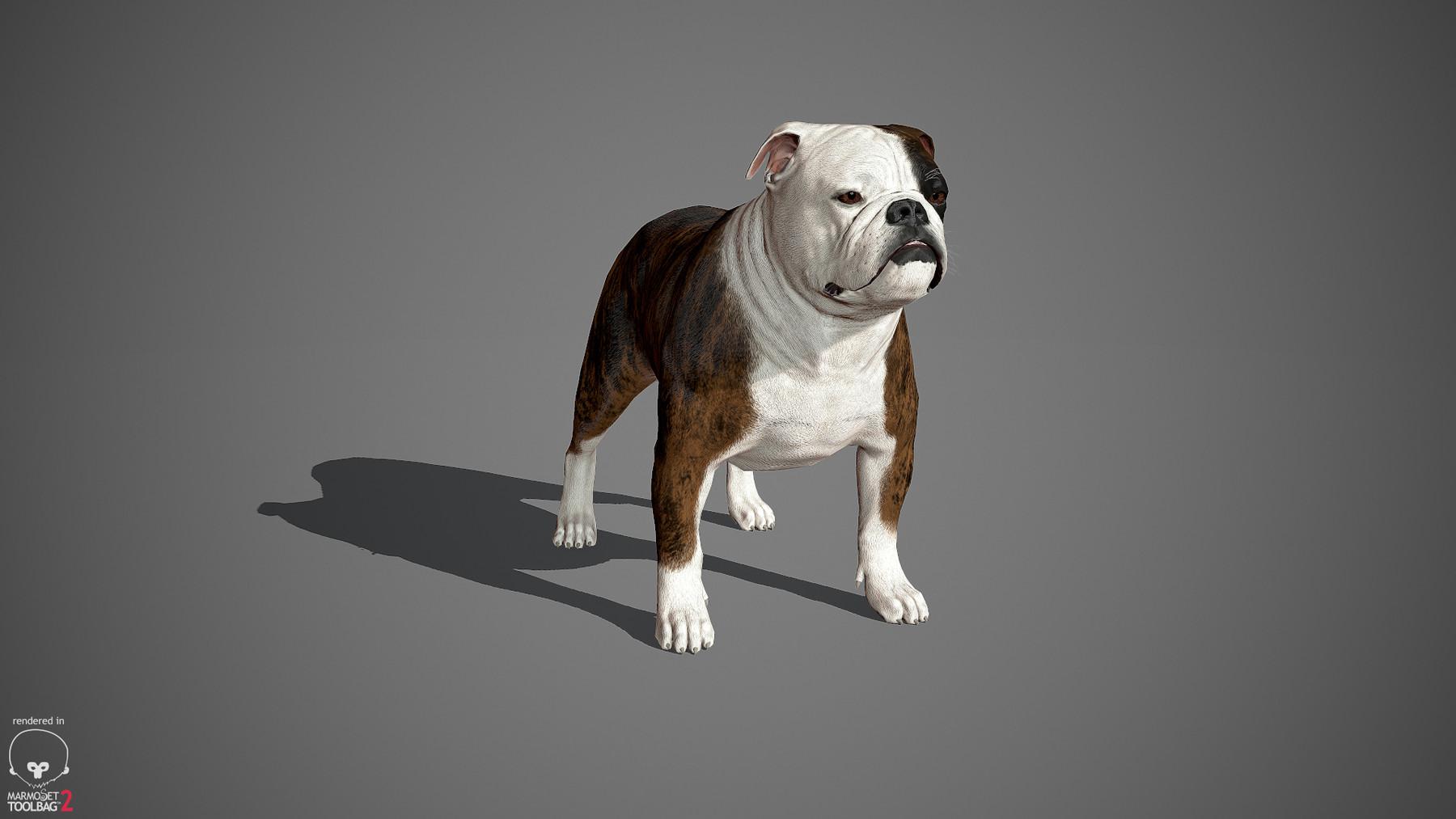 Englishbulldog by alexlashko marmoset 33