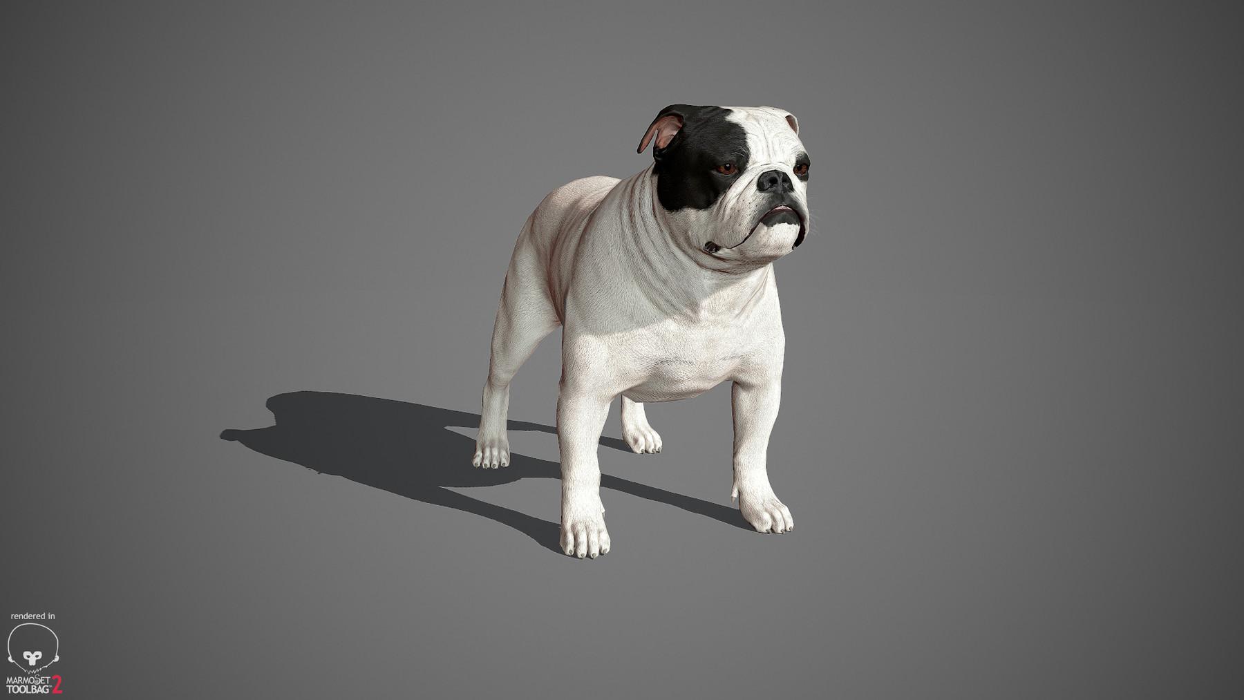 Englishbulldog by alexlashko marmoset 34