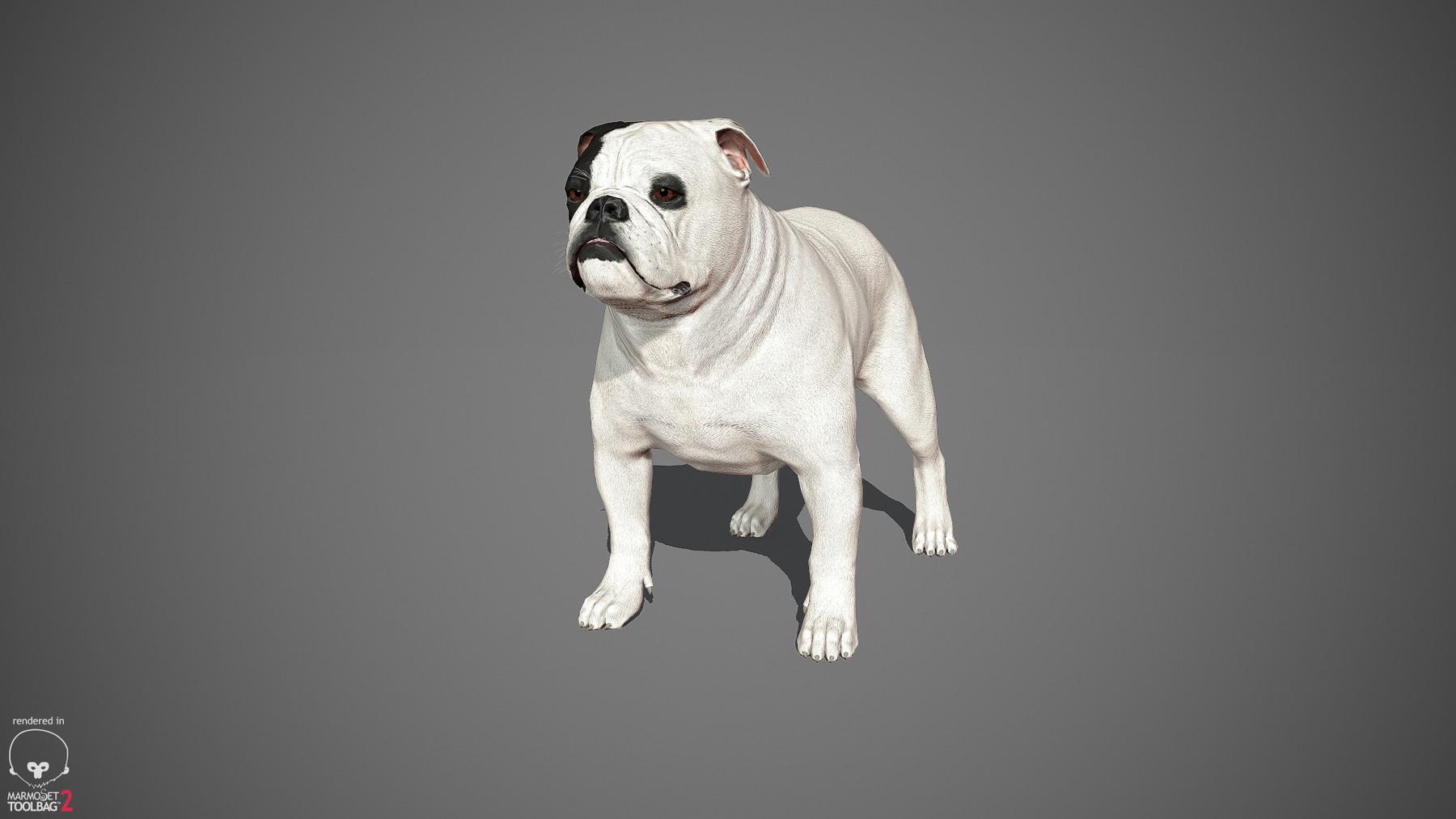 Englishbulldog by alexlashko marmoset 35