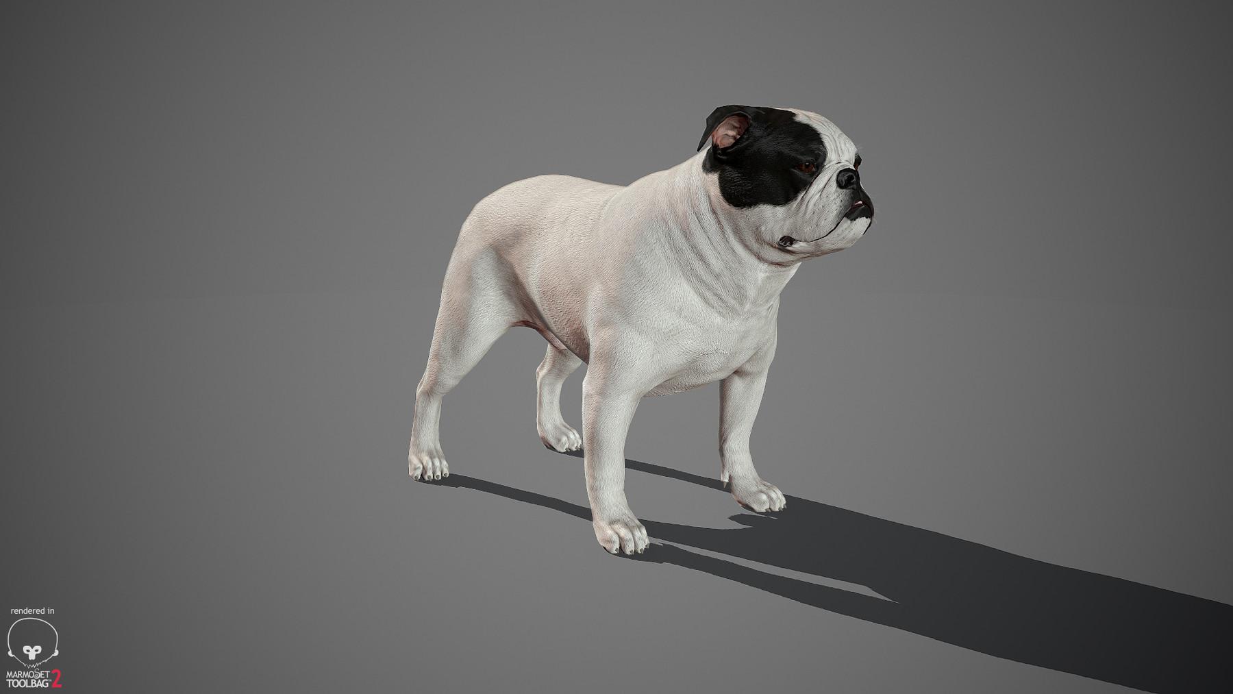 Englishbulldog by alexlashko marmoset 38