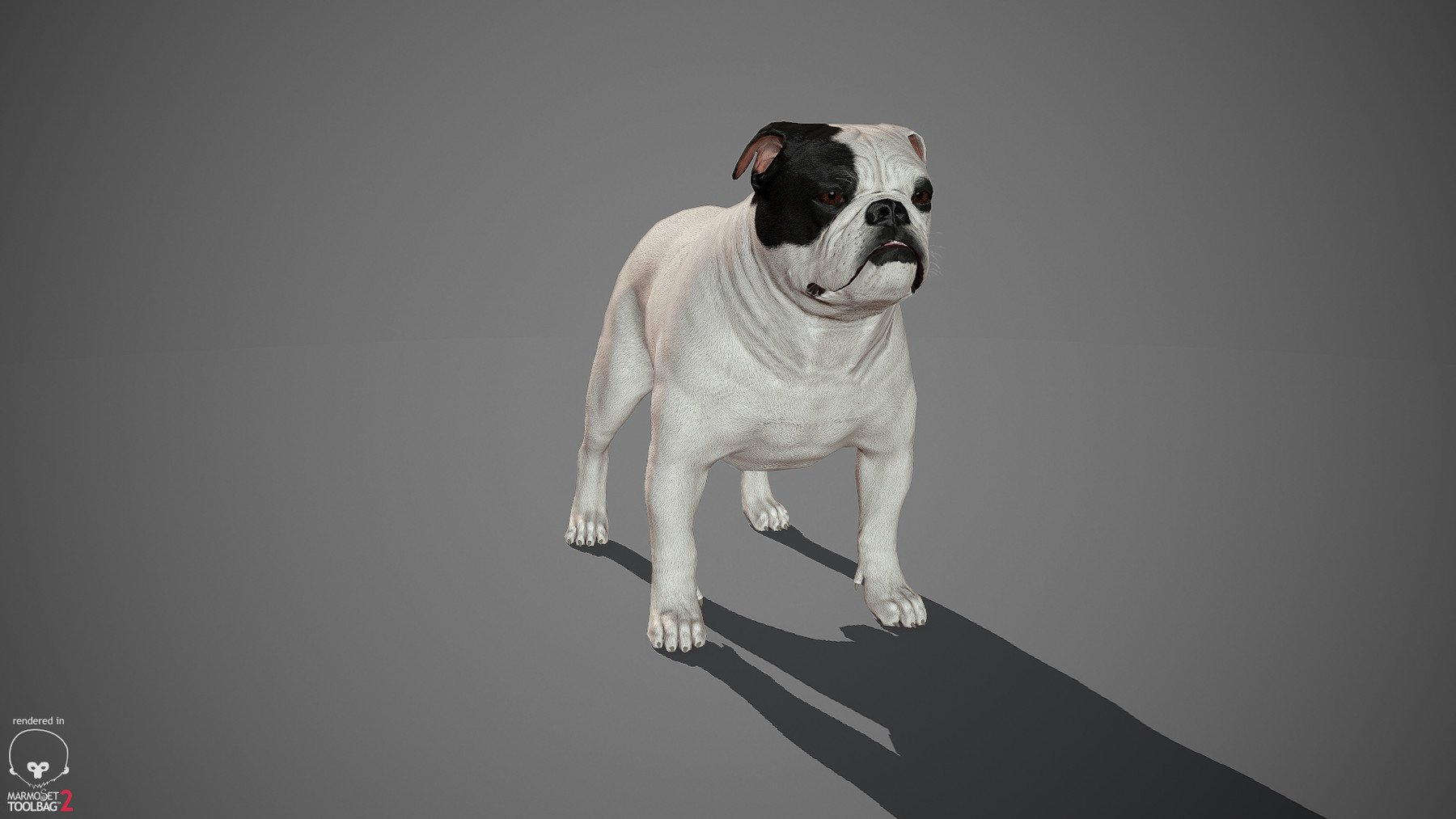 Englishbulldog by alexlashko marmoset 39