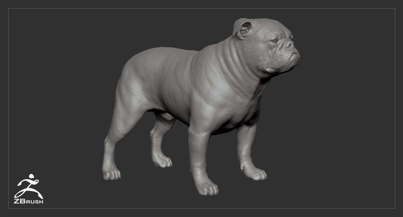 Englishbulldog by alexlashko zbrush 01
