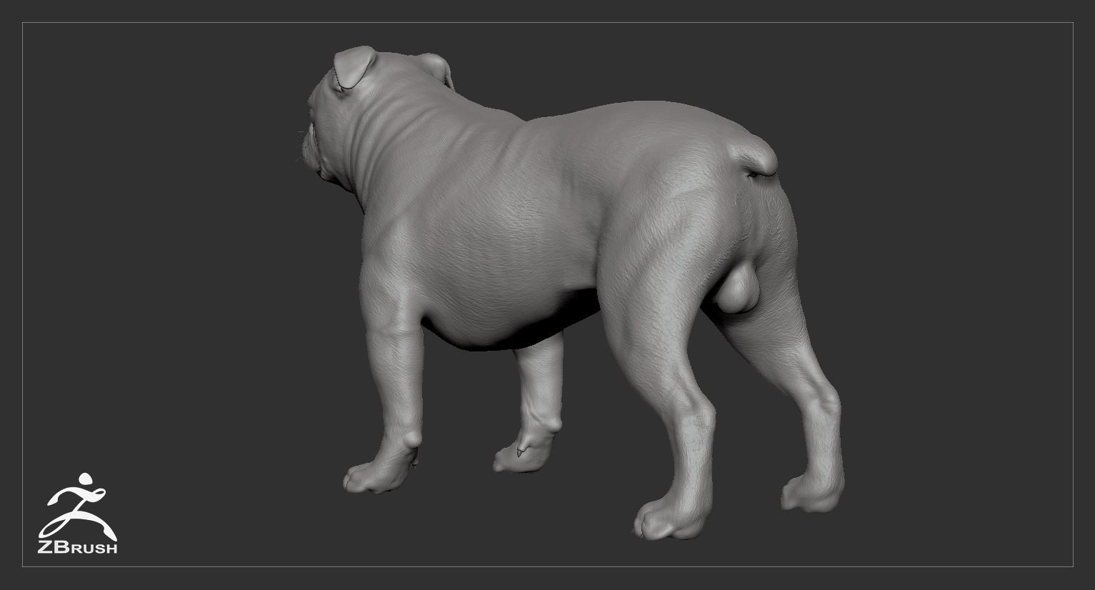 Englishbulldog by alexlashko zbrush 05