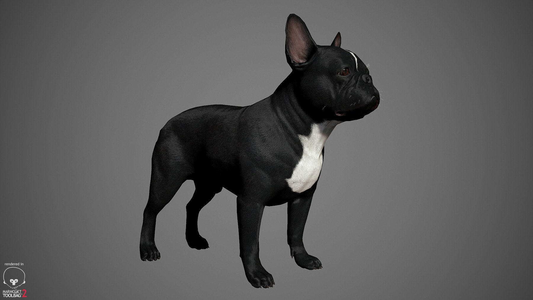 Frenchbulldog by alexlashko marmoset 03