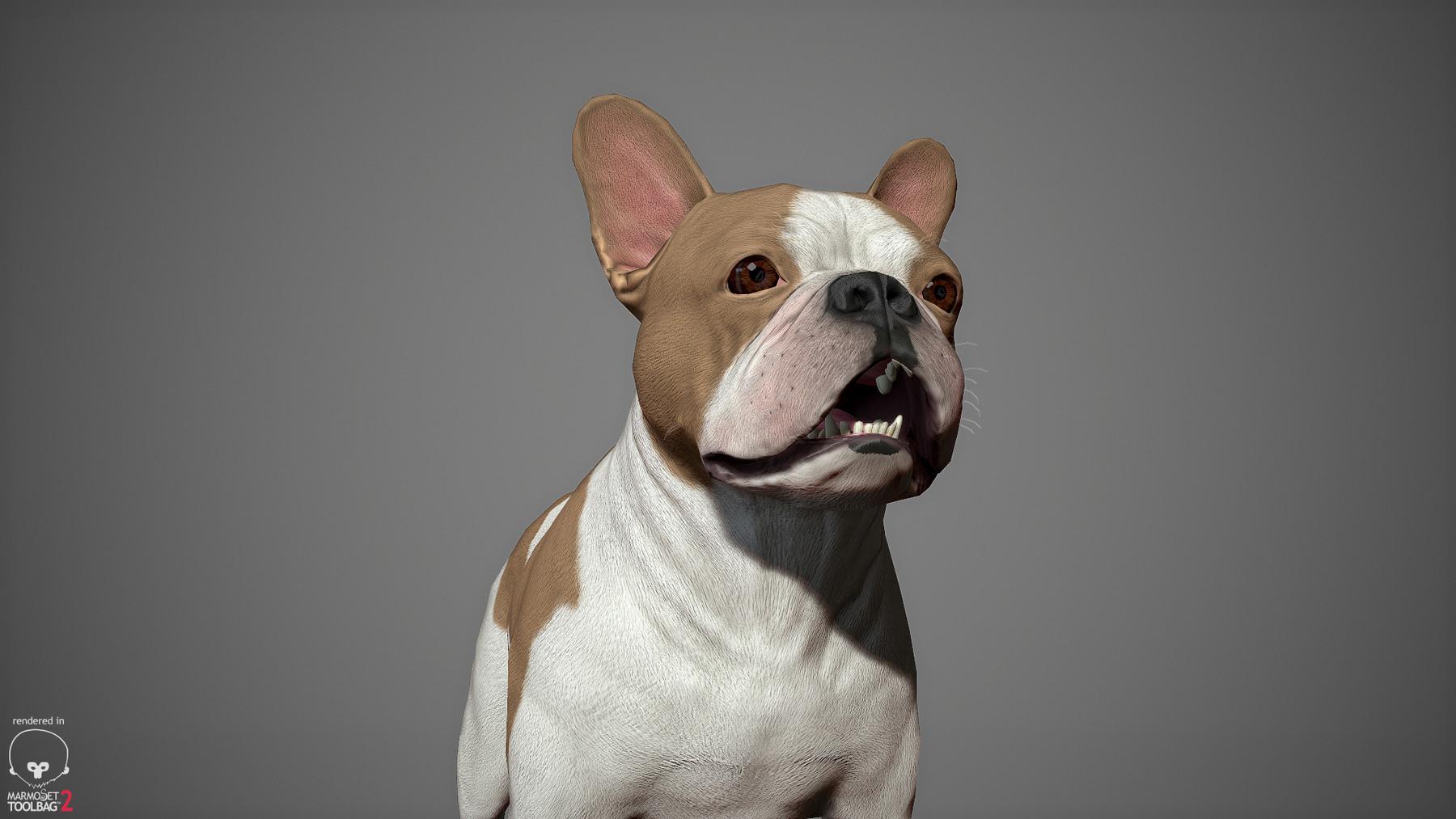 Frenchbulldog by alexlashko marmoset 15