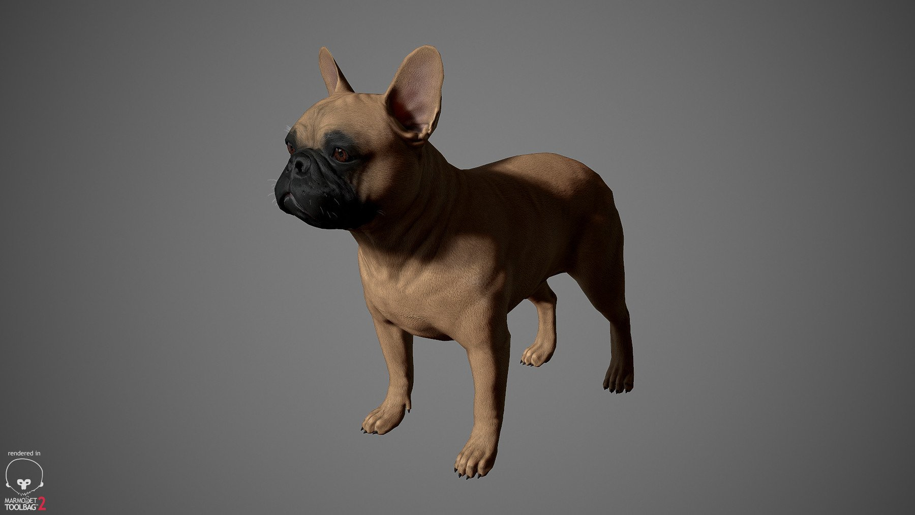 Frenchbulldog by alexlashko marmoset 20