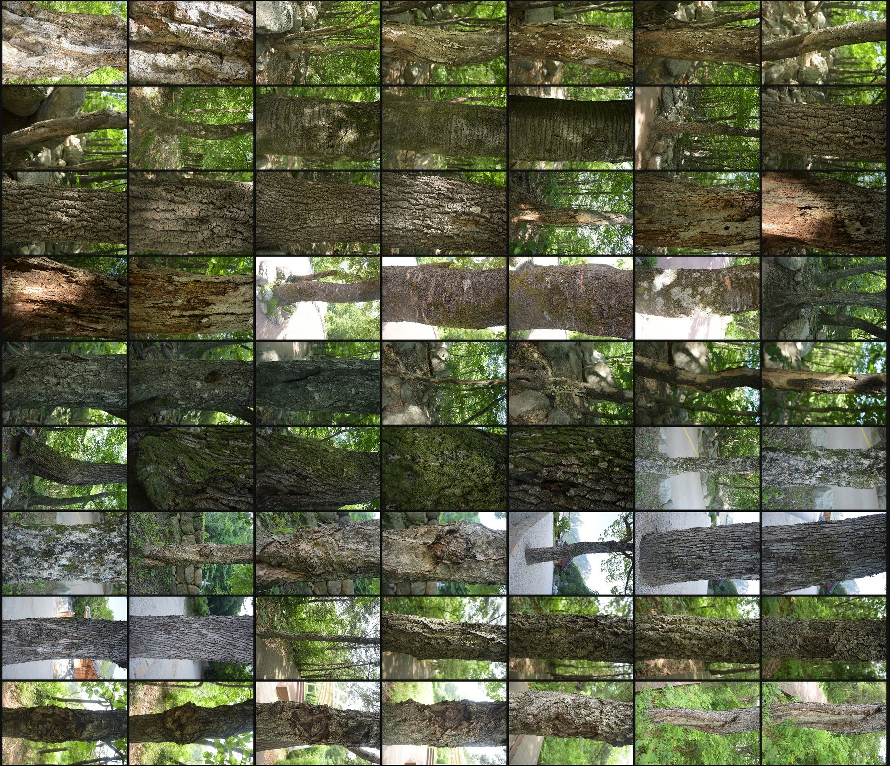 Texture reference pack tree barks volume7 2