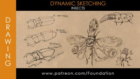 Foundation Art Group - Dynamic Sketching: Insects