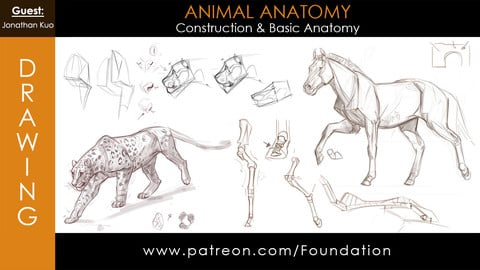 Foundation Art Group - Animal Anatomy - Construction & Basic Anatomy w/ Jonathan Kuo